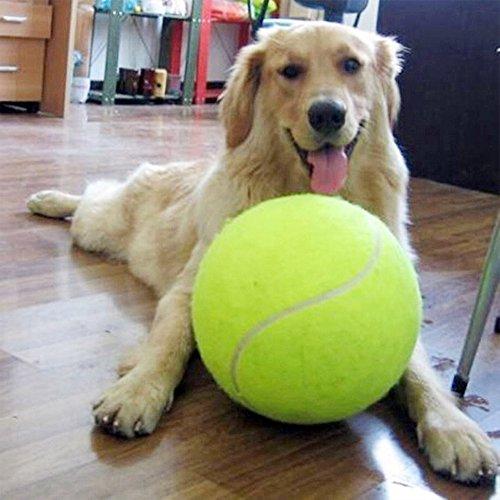 alxcio giant hundespielzeug b lle robust pet tennis ball f r kleine hundetennisball f r. Black Bedroom Furniture Sets. Home Design Ideas